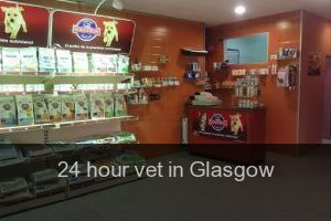 24 hour vet in Glasgow