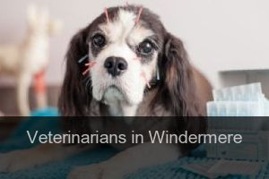Veterinarians in Windermere