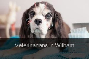 Veterinarians in Witham