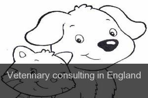 Veterinary consulting in England