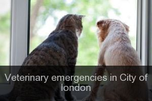 Veterinary emergencies in City of london
