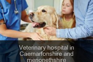 Veterinary hospital in Caernarfonshire and merionethshire