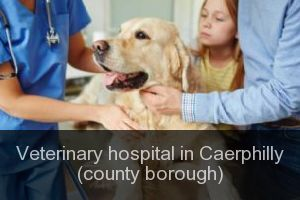 Veterinary hospital in Caerphilly (county borough)